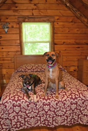 dog friendly vacation hocking hills dog life in cle Pet Friendly Cabins Hocking Hills
