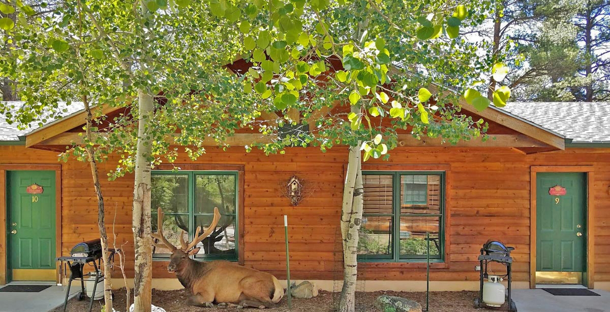 evergreens on fall river cabins and a vacation home estes Fall River Cabins Estes Park
