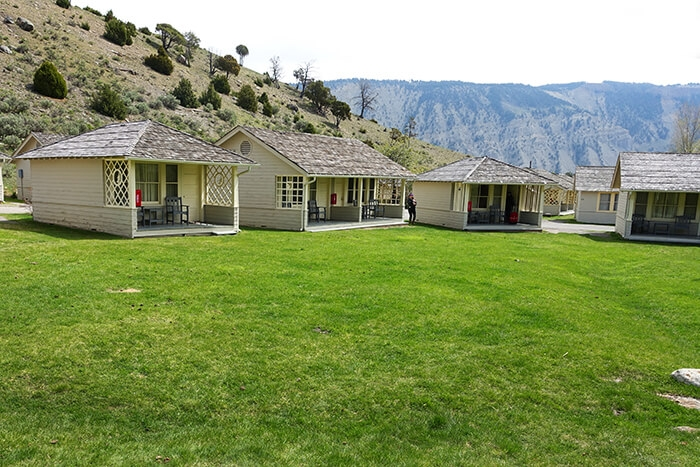 observe the wildlife at yellowstones mammoth hot springs Mammoth Hot Springs Hotel And Cabins