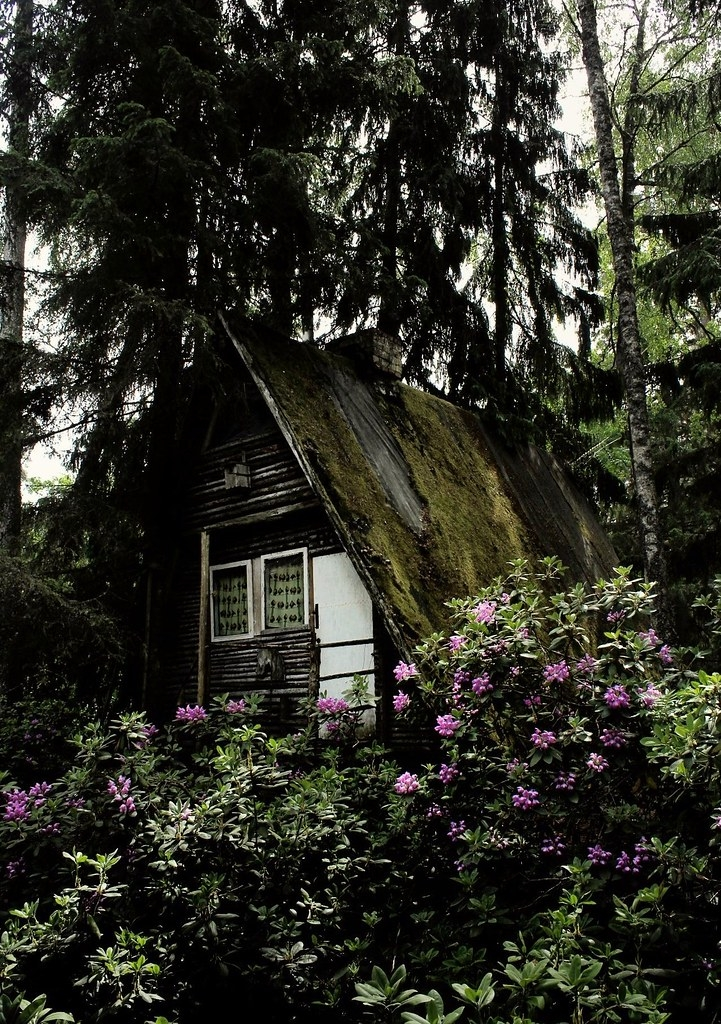 someday i wild build my own cabin in the woods cabin locat Build My Own Cabin