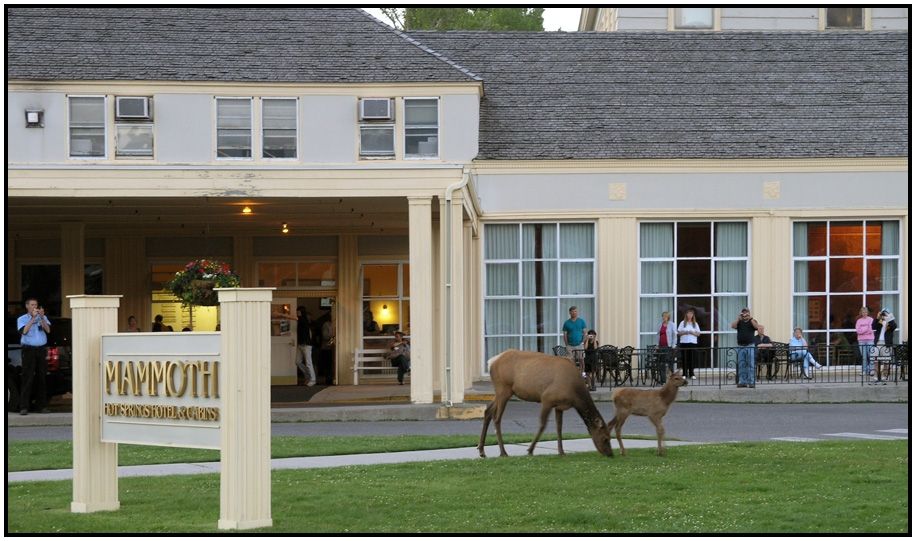 travel north america united states wyoming Mammoth Hot Springs Hotel And Cabins