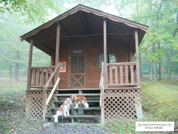 dog friendly cottages and resorts in raystown lake region Pet Friendly Cabins In Pa