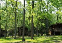 3 cozy cabinssimple lodging in the countryluray va Shenandoah Camping Cabins