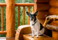 4 reasons to stay in our pet friendly cabins in gatlinburg Pet Friendly Smoky Mountain Cabins