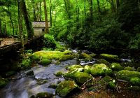 4 unexpected bonuses of staying at a secluded smoky mountain Secluded Cabins In Gatlinburg Tn