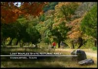 lost maples state natural area texas parks wildlife Lost Maples State Park Cabins
